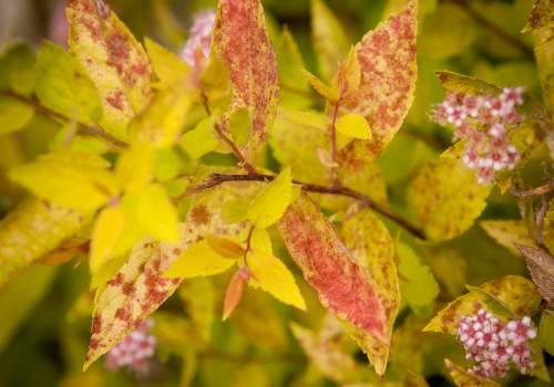 Plamistość liści