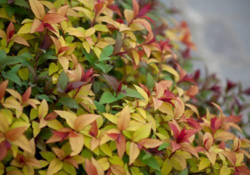 Rośliny ozdobne z liści